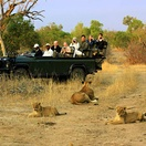Viewing lions on a game drive in the Greater Kruger National Park